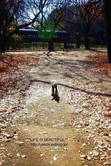初冬の公園_d0083623_2314244.jpg