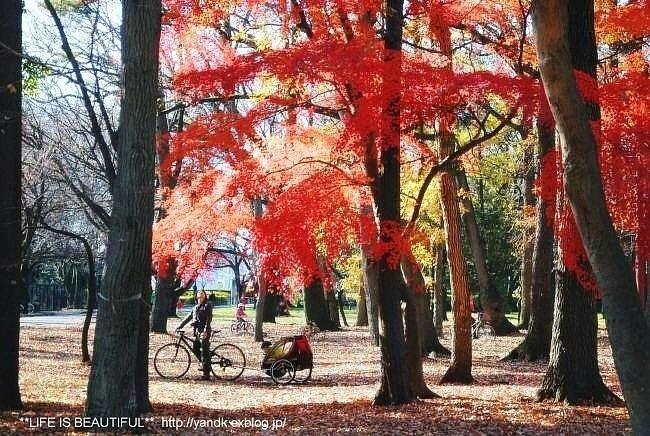 初冬の公園_d0083623_2362384.jpg