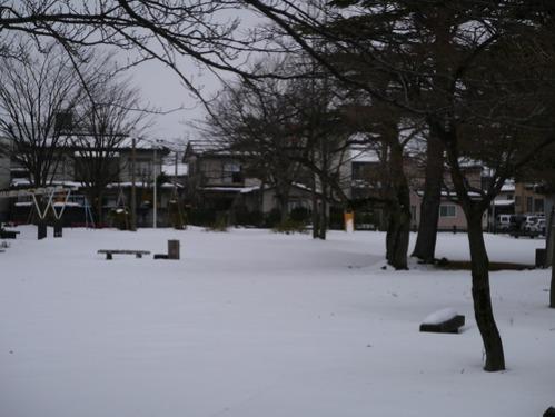 早速雪が積もりました!_e0266363_2124758.jpg