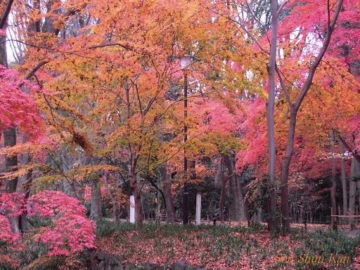 下鴨神社はまだ見頃 2013年12月15日_a0164068_23525080.jpg