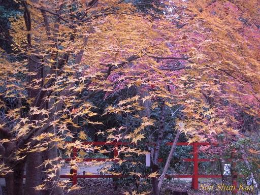 下鴨神社はまだ見頃 2013年12月15日_a0164068_23533416.jpg