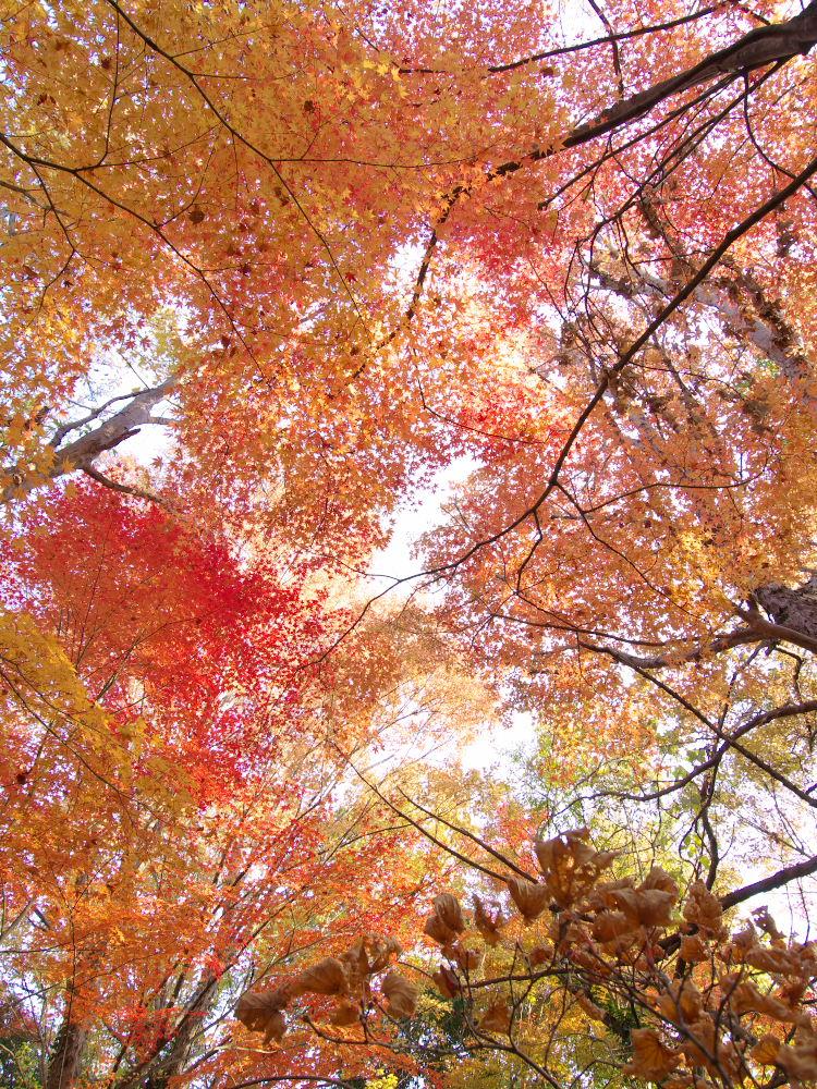 紅葉 2013 <万博公園>            _f0021869_2046682.jpg