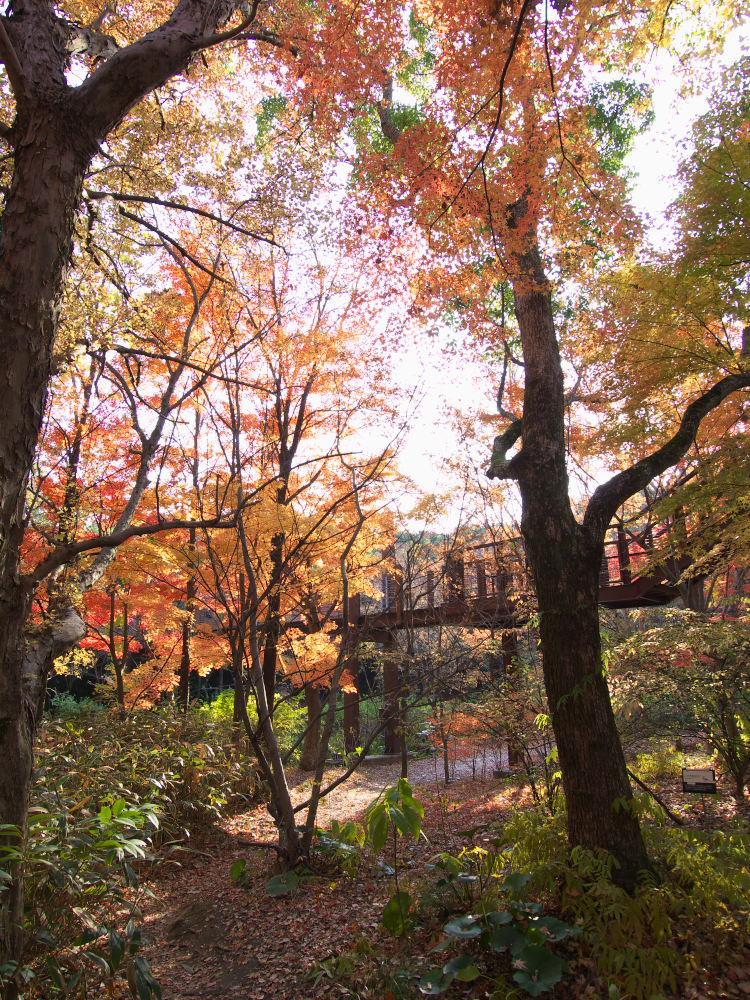 紅葉 2013 <万博公園>            _f0021869_20472134.jpg