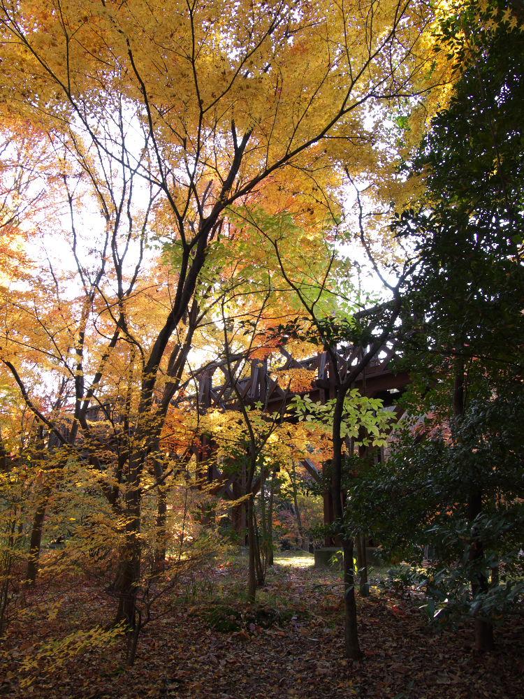 紅葉 2013 <万博公園>            _f0021869_20474066.jpg