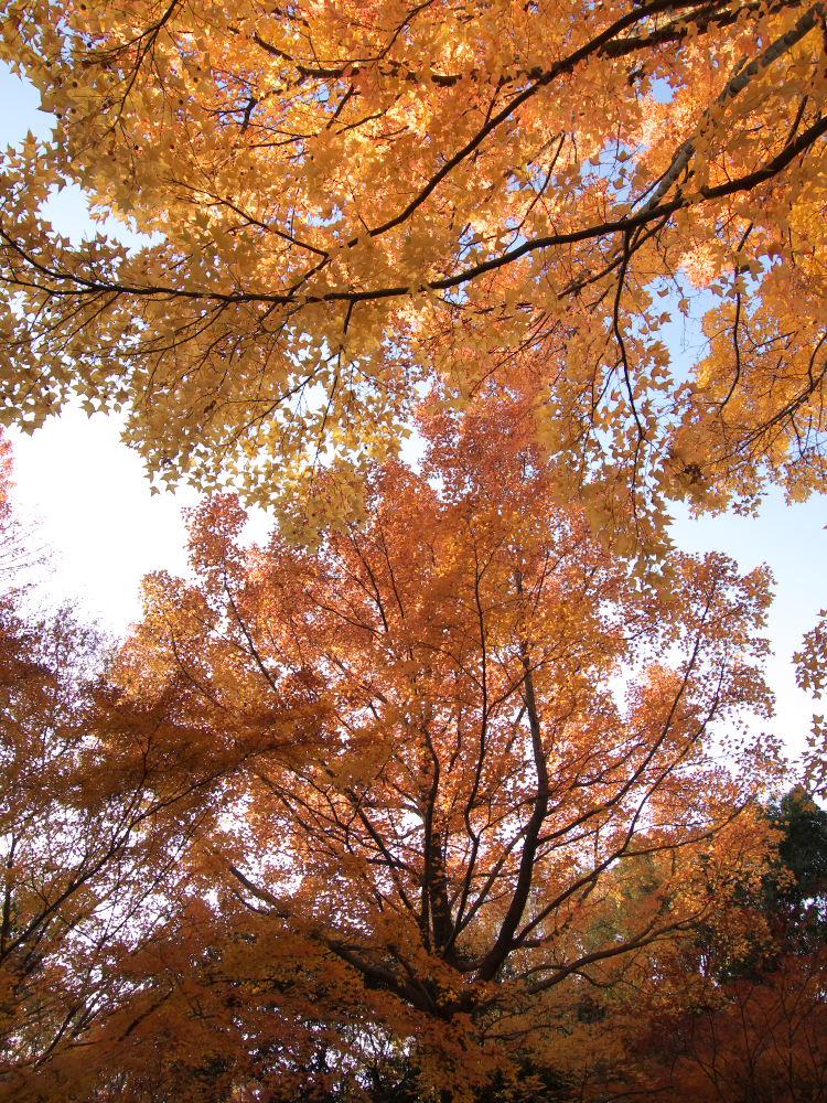 紅葉 2013 <万博公園>            _f0021869_20494383.jpg