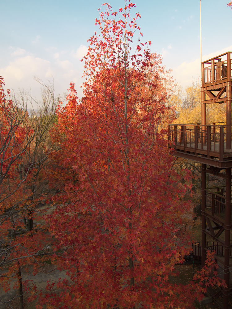 紅葉 2013 <万博公園>            _f0021869_20494471.jpg