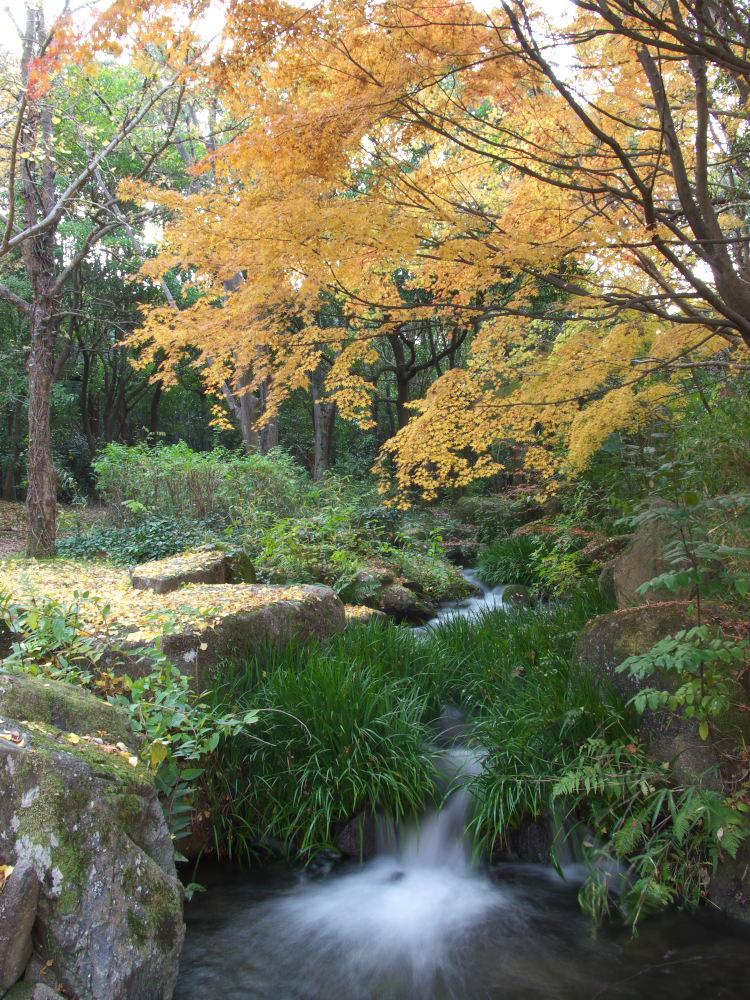 紅葉 2013 <万博公園>            _f0021869_20552357.jpg