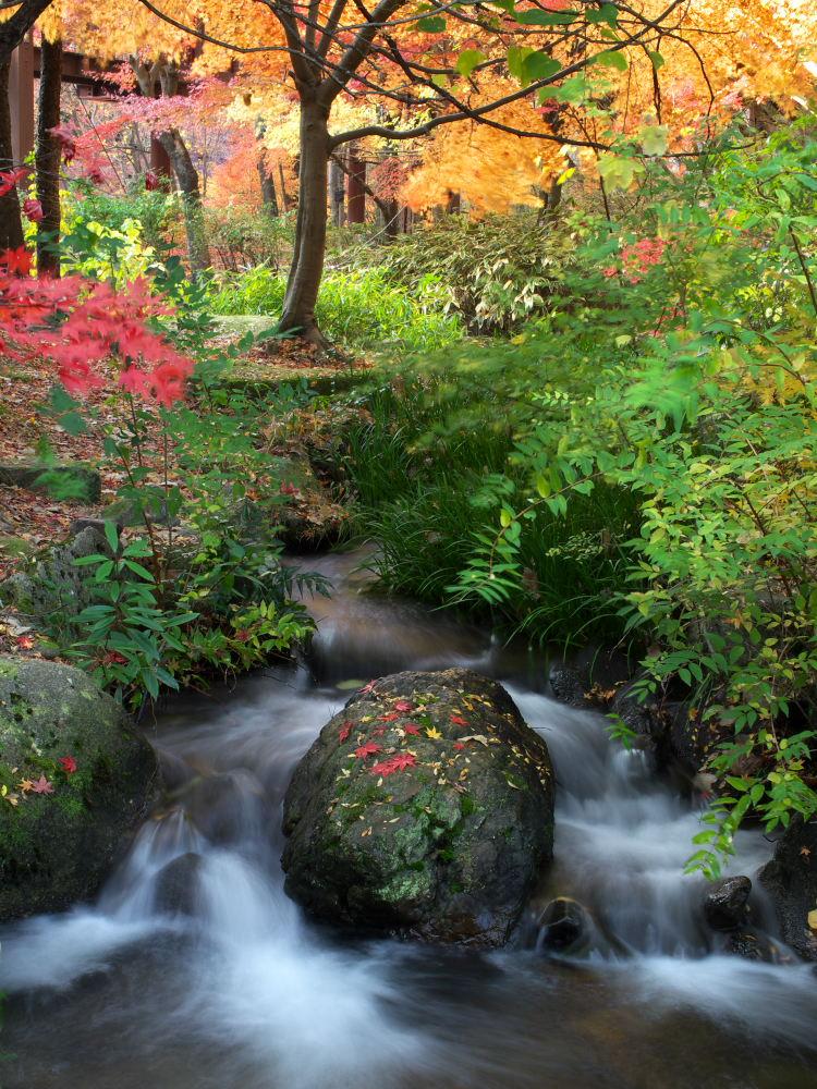紅葉 2013 <万博公園>            _f0021869_20563435.jpg