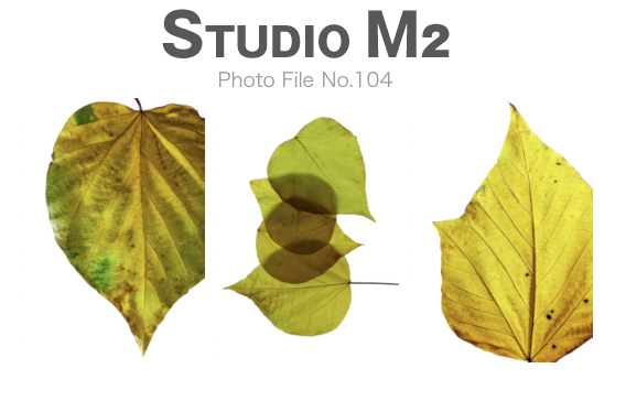 STUDIO M2 Photo File No.104「落ち葉」_a0002672_1824887.jpg