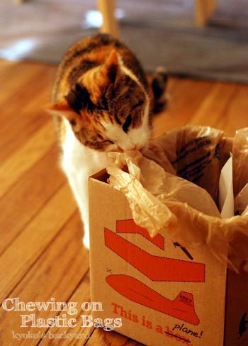 ビニール袋を噛む猫_b0253205_261273.jpg