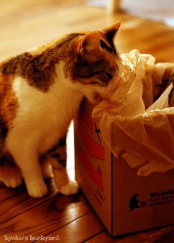 ビニール袋を噛む猫_b0253205_265535.jpg