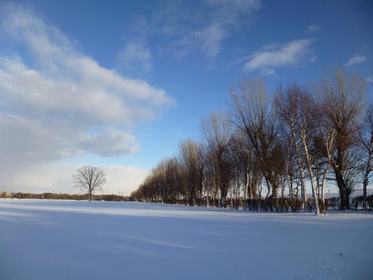 雪景色_b0198109_207596.jpg