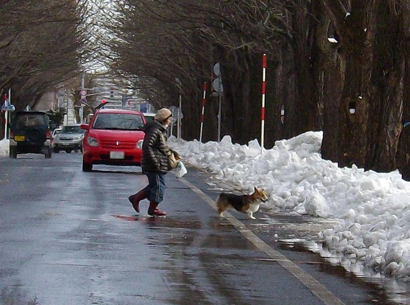 暴風雪から一転して雪解けの札幌_c0025115_16444948.jpg