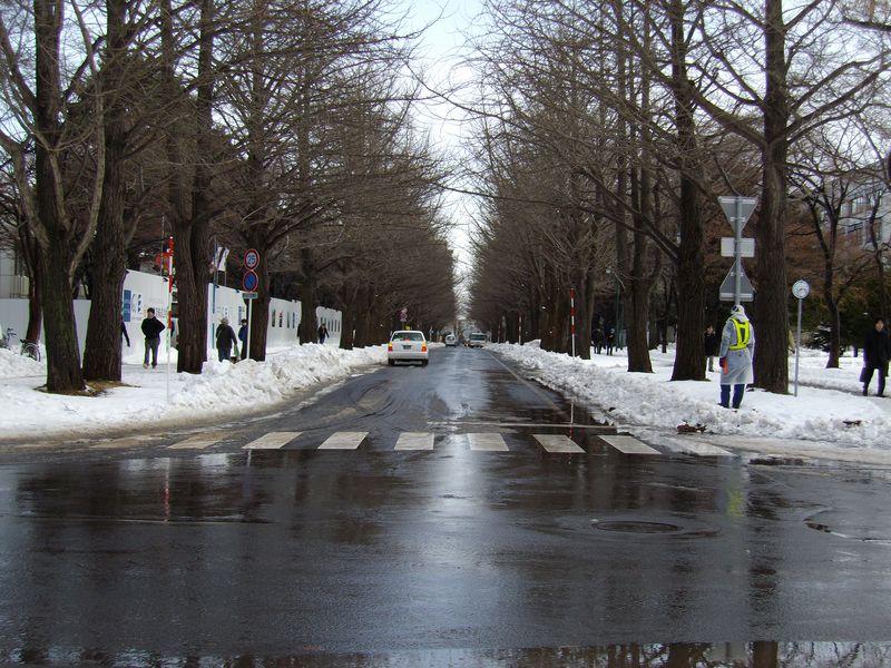 暴風雪から一転して雪解けの札幌_c0025115_16445324.jpg