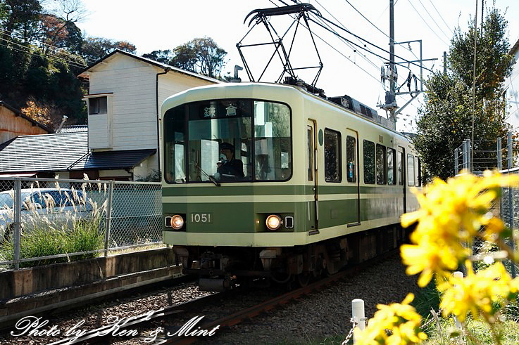 江ノ電散歩 「長谷寺」 編 ♪_e0218518_19264015.jpg