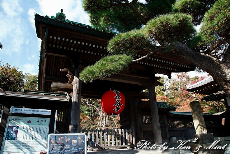 江ノ電散歩 「長谷寺」 編 ♪_e0218518_19394556.jpg
