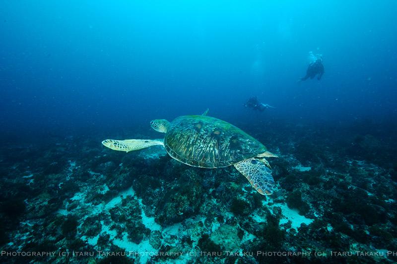 巨大なアオウミガメがゴロゴロいた!_b0186442_2213386.jpg