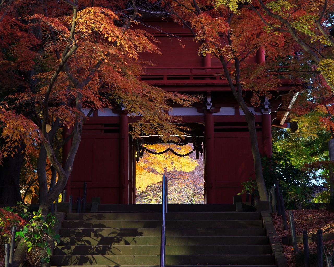 秋の本土寺 2013 3_f0018464_18564672.jpg