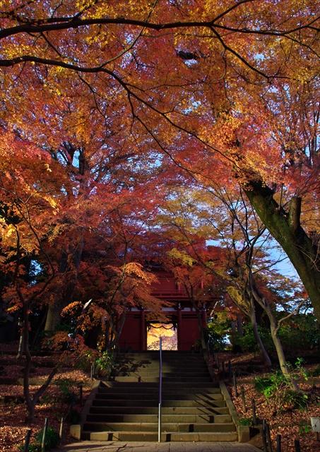 秋の本土寺 2013 3_f0018464_1857088.jpg
