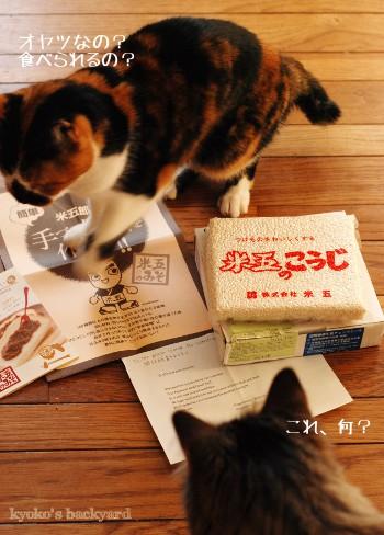 日本からお取り寄せした、米麹 (と、猫の反応)_b0253205_2101978.jpg