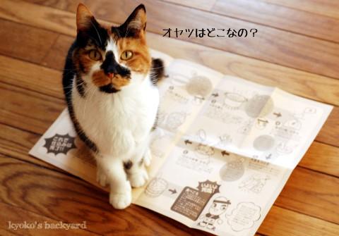 日本からお取り寄せした、米麹 (と、猫の反応)_b0253205_2114489.jpg