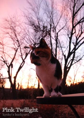 ピンクのたそがれに、ピンクに染まる猫_b0253205_2213620.jpg