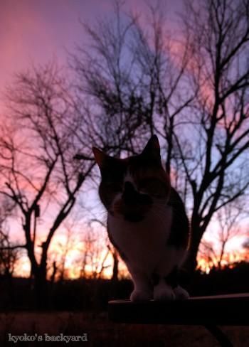 ピンクのたそがれに、ピンクに染まる猫_b0253205_2225516.jpg
