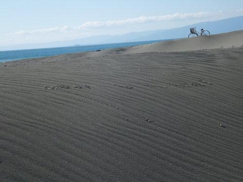 砂紋を眺めながら...湘南海岸を散歩!_b0137932_2147249.jpg