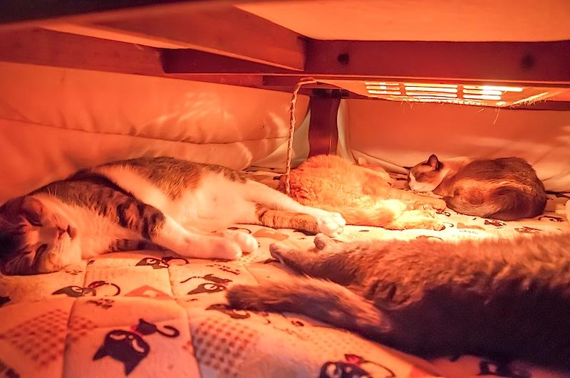 猫用電気マット_d0073743_109145.jpg