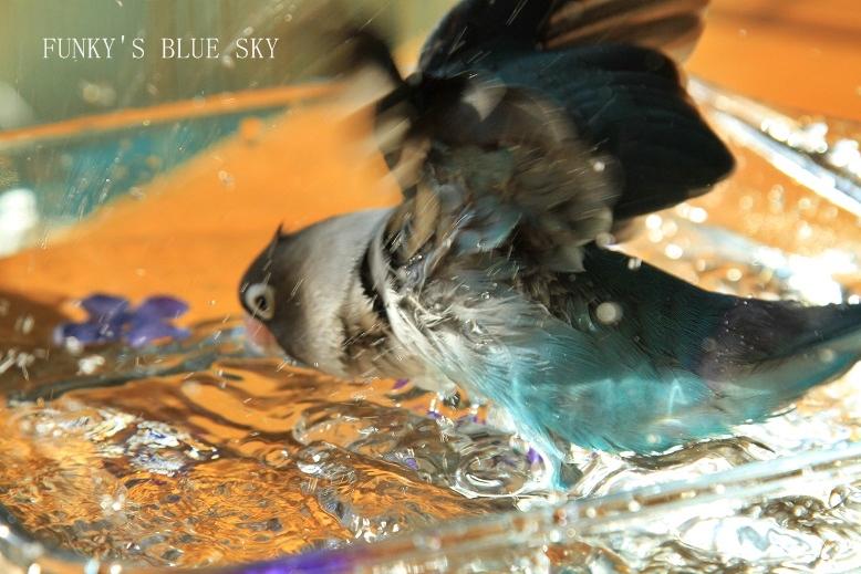 水浴(び)B.Bの記録 → 呼吸が合った日? (11月23日)_c0145250_1054087.jpg