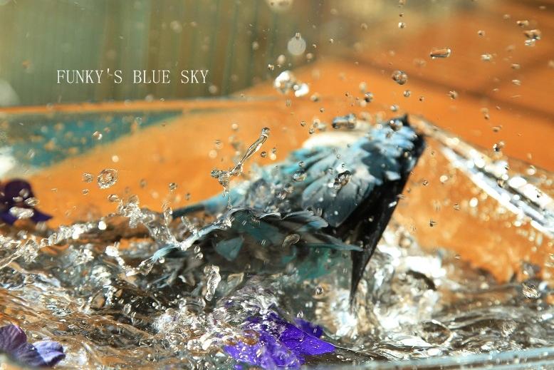 水浴(び)B.Bの記録 → 呼吸が合った日? (11月23日)_c0145250_10545244.jpg