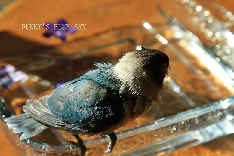 水浴(び)B.Bの記録 → 呼吸が合った日? (11月23日)_c0145250_10551435.jpg