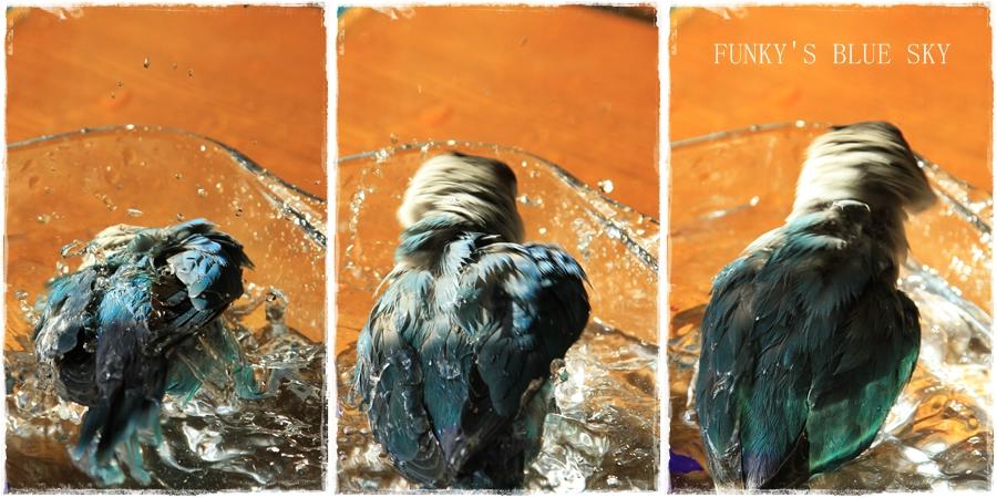 水浴(び)B.Bの記録 → 呼吸が合った日? (11月23日)_c0145250_10552395.jpg