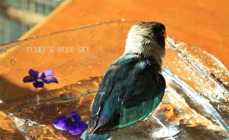水浴(び)B.Bの記録 → 呼吸が合った日? (11月23日)_c0145250_10553094.jpg