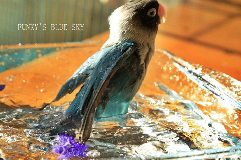 水浴(び)B.Bの記録 → 呼吸が合った日? (11月23日)_c0145250_1055734.jpg