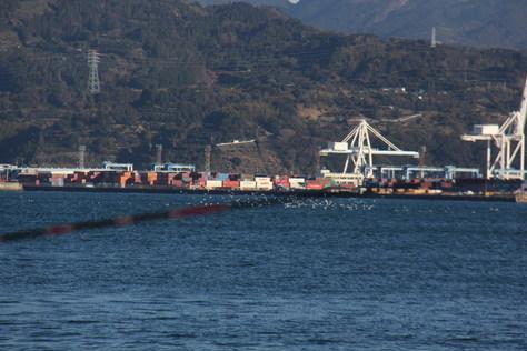 清水港にトリヤマが!!_f0175450_19465778.jpg
