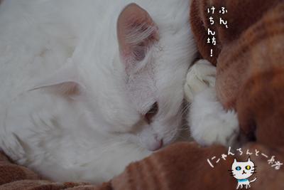 ミミちゃん 十一月三十日_e0031853_144343100.jpg