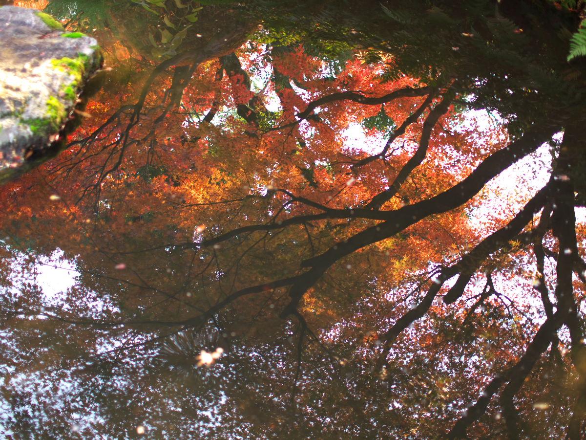紅葉 2013 <太閤園>            _f0021869_0215355.jpg