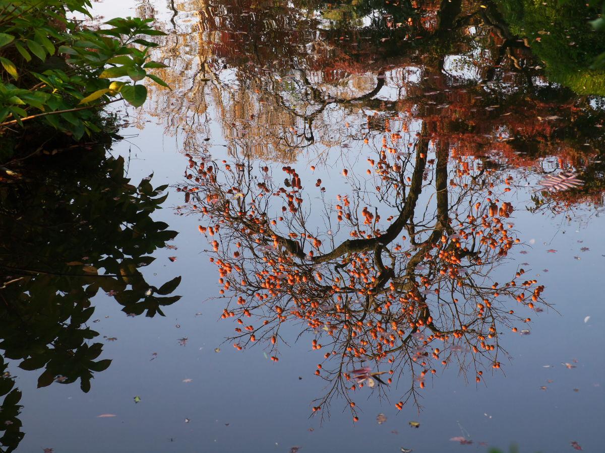 紅葉 2013 <太閤園>            _f0021869_0232844.jpg