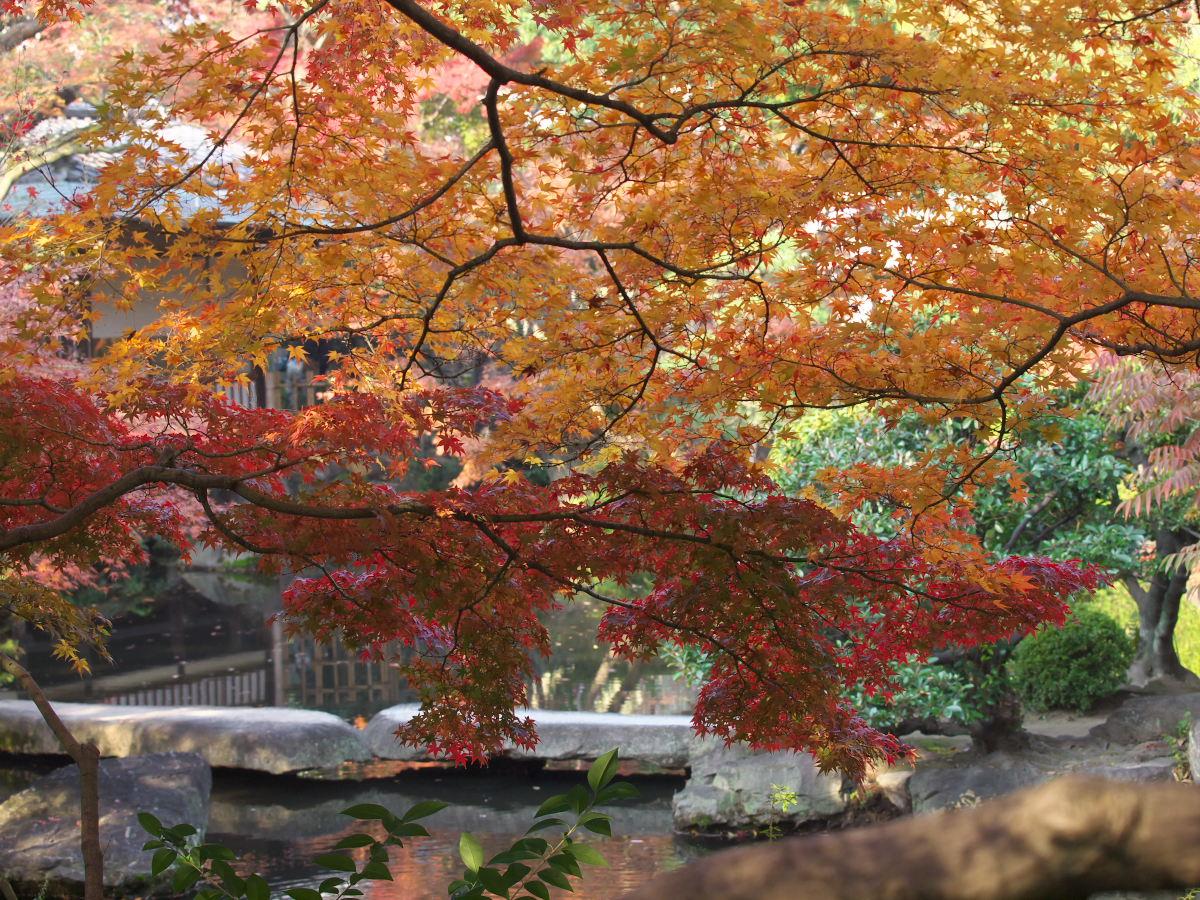 紅葉 2013 <太閤園>            _f0021869_023526.jpg