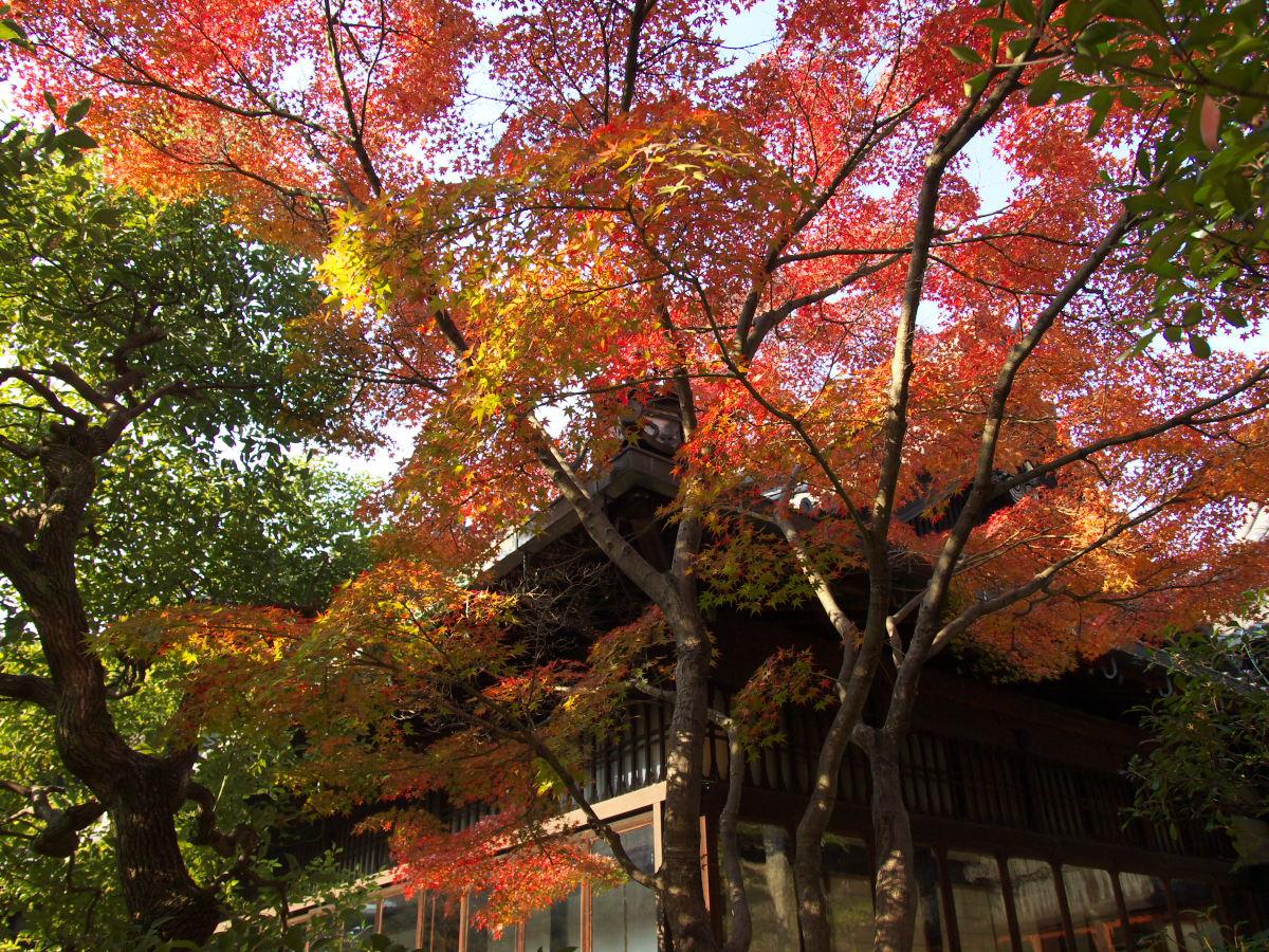 紅葉 2013 <太閤園>            _f0021869_024973.jpg