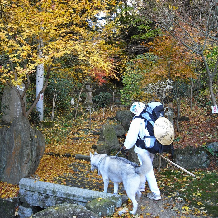 Memory of the second pilgrimage with husky HANA II_c0049299_19211315.jpg