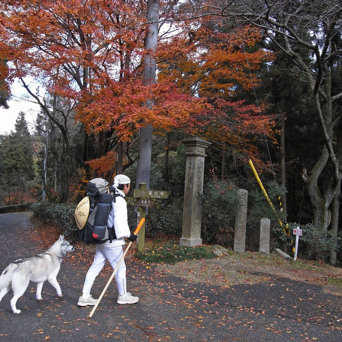 Memory of the second pilgrimage with husky HANA II_c0049299_1925471.jpg