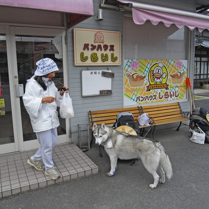 Memory of the second pilgrimage with husky HANA II_c0049299_19271940.jpg