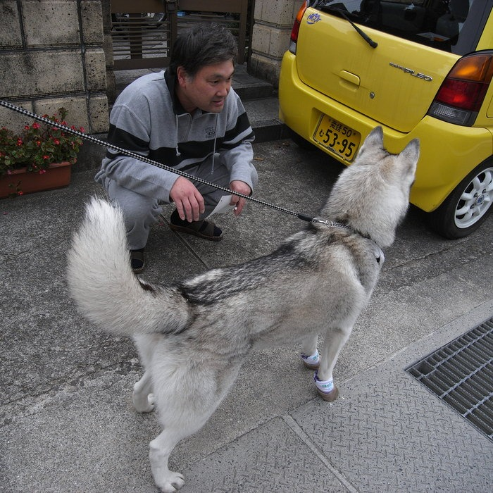 Memory of the second pilgrimage with husky HANA II_c0049299_19335040.jpg