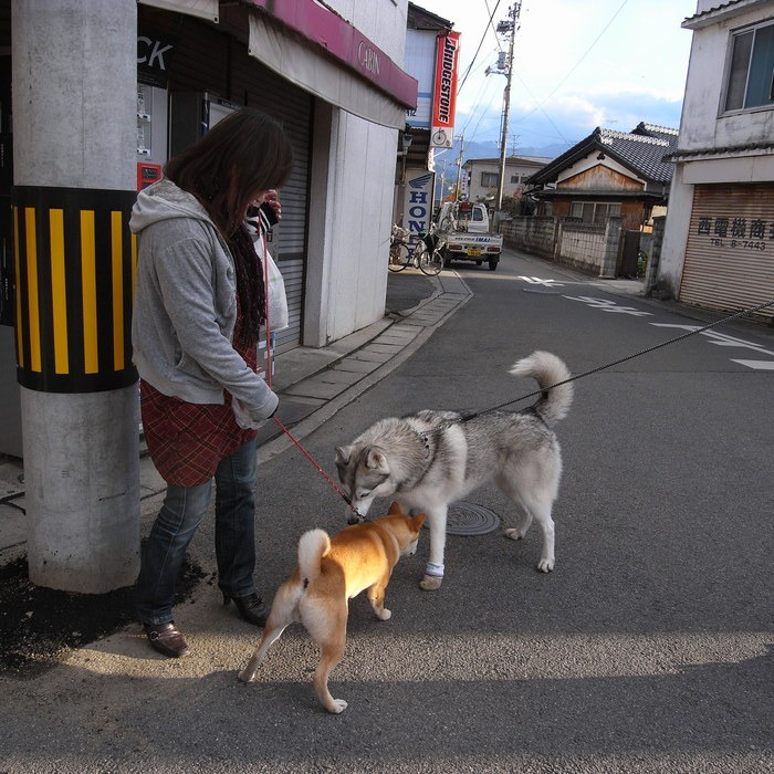 Memory of the second pilgrimage with husky HANA II_c0049299_1937933.jpg