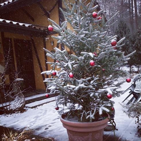 雪_f0111415_1344527.jpg