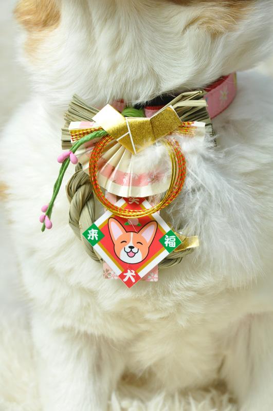 笑犬来福お正月飾り、わんこさん用です_d0102523_13212820.jpg