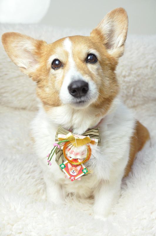 笑犬来福お正月飾り、わんこさん用です_d0102523_1321770.jpg