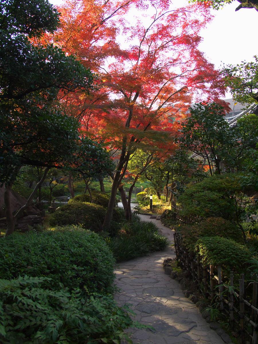 紅葉 2013 <太閤園>             _f0021869_21104434.jpg